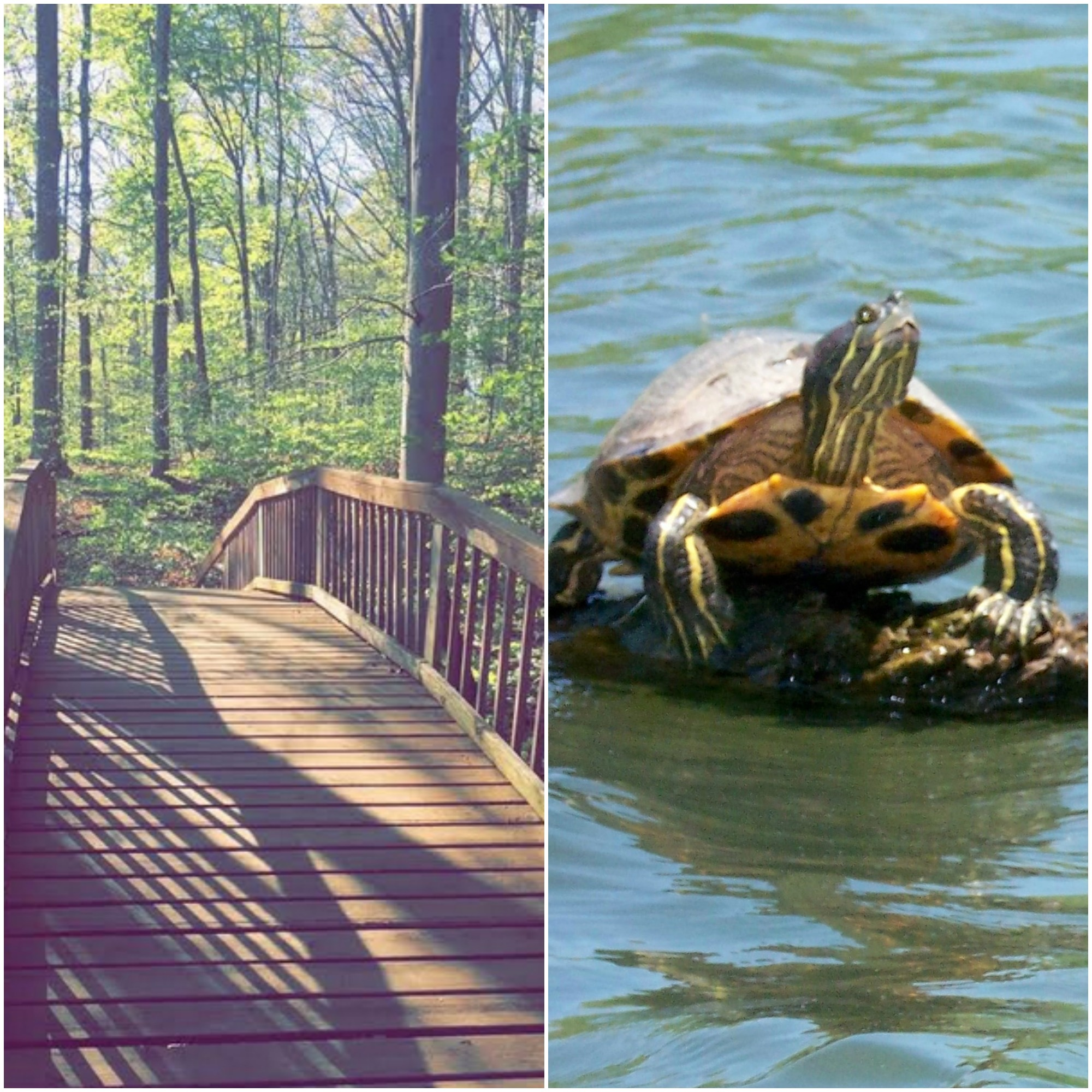 Lake Monroe and a turtle
