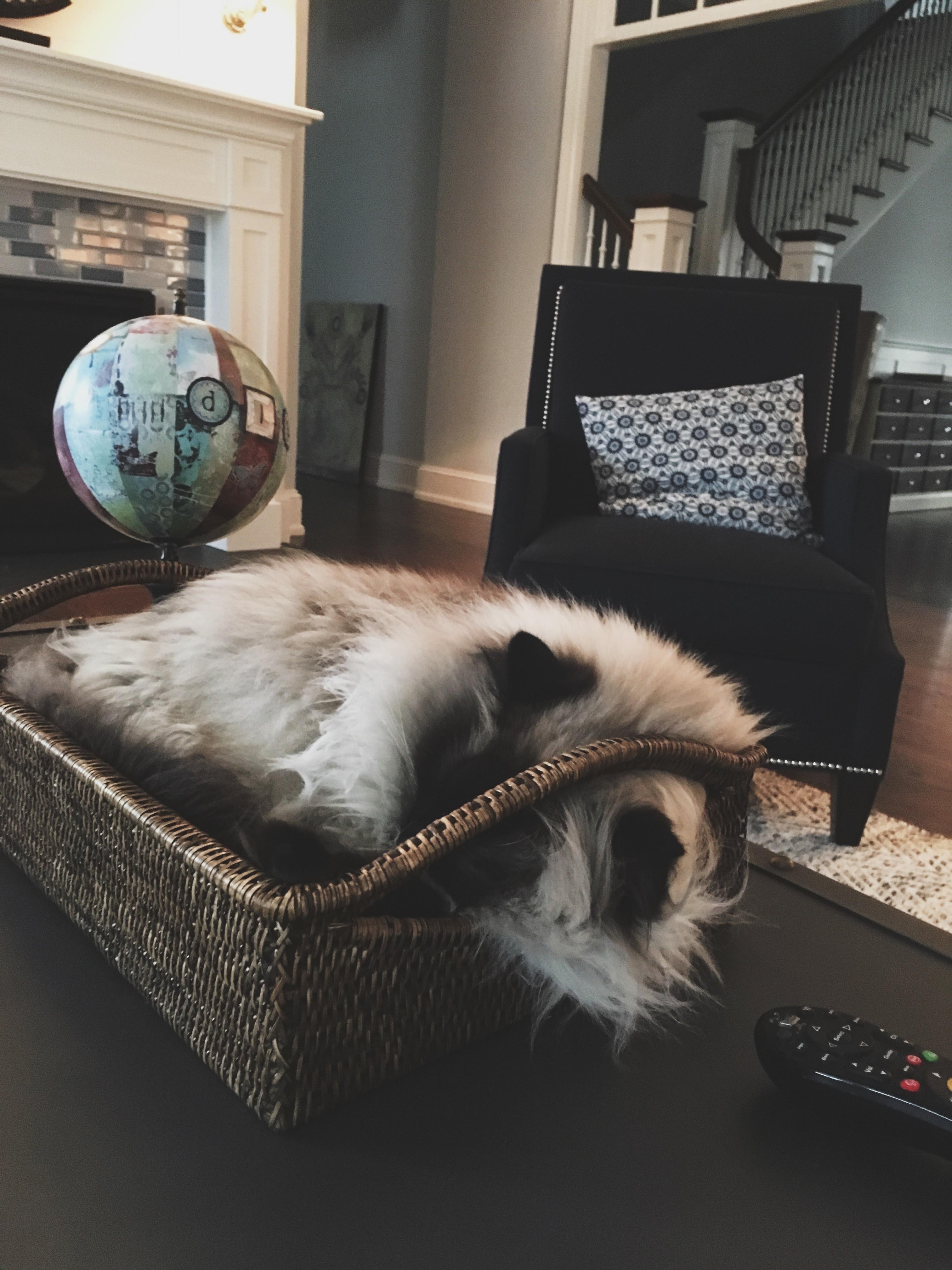 A cat sleeps