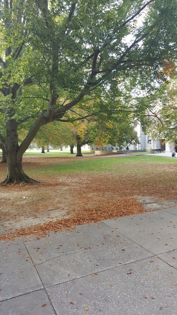 Wright Quad on an autumn day