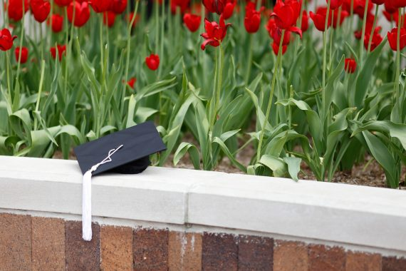 A graduation cap sitting near a bed of roses