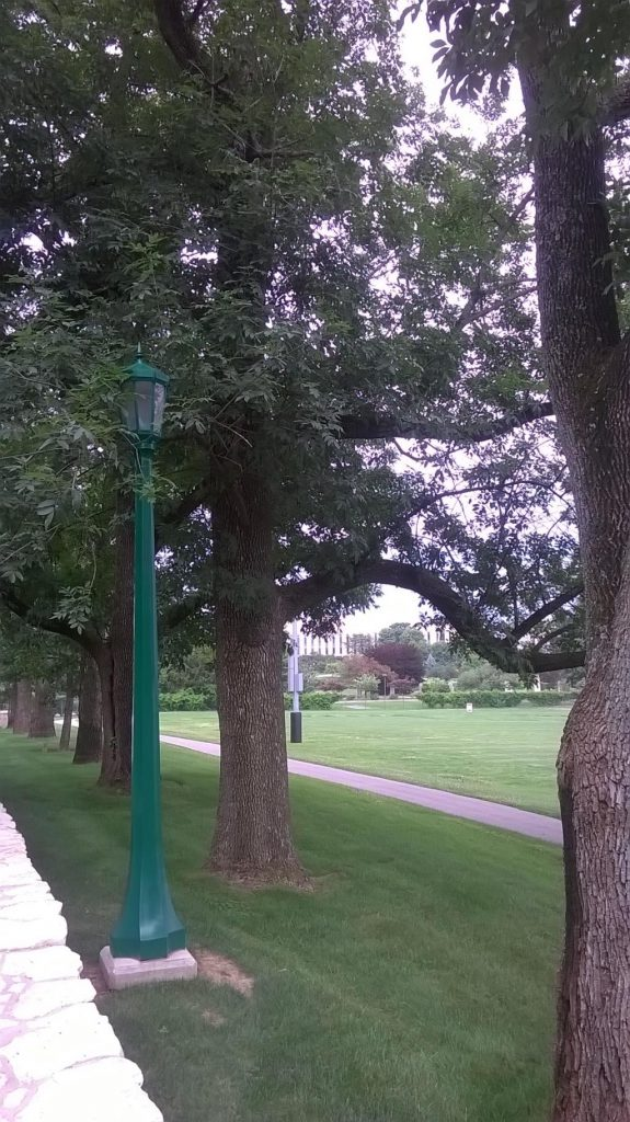 A row of ash trees on campus