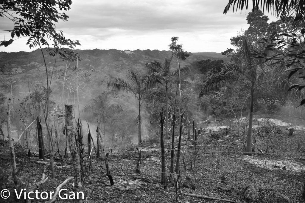 Deforestation in progress