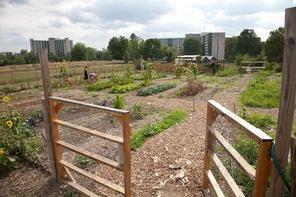 IU campus garden